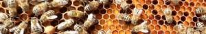 cropped-beekeeper-facebook-banner.jpg
